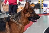 Выставка собак в Туле 26.01, Фото: 21