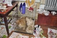 Похищенные собаки, Фото: 8