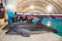 Дельфины, Фото: 16