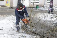 Кронирование деревьев в Туле: что можно, а чего нельзя?, Фото: 10