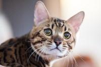 Международная выставка кошек. 16-17 апреля 2016 года, Фото: 48