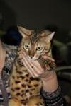 В Туле прошла международная выставка кошек, Фото: 54