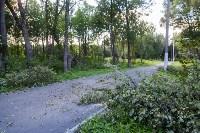 В Баташевском саду из-за непогоды упали вековые деревья, Фото: 2