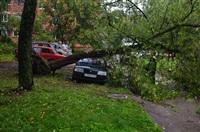 На автомобиль упало дерево, Фото: 1