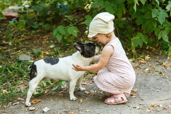 """""""Собака, собака, давай с тобой дружить?"""""""
