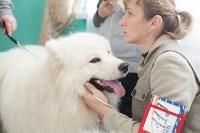 Выставка собак в Туле, 29.11.2015, Фото: 96