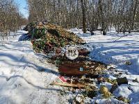 Под Тулой неизвестные сбросили в лесополосе несколько тонн гнилых овощей, Фото: 3