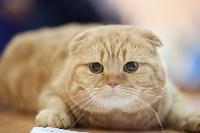 В Туле прошла выставка «Пряничные кошки» , Фото: 111