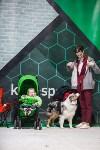 Выставка собак в Туле, Фото: 17