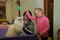 Выставка кошек. 21.12.2014, Фото: 29