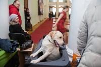 Всероссийская выставка собак 2017, Фото: 16