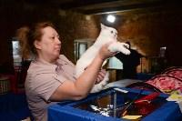 Выставка кошек в Искре, Фото: 31