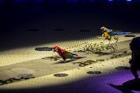 Шоу фонтанов «13 месяцев» в Тульском цирке – подарите себе и близким путевку в сказку!, Фото: 20