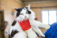 Волонтеры спасли кошек из адской квартиры, Фото: 55