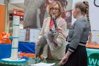 Выставка кошек в Туле, Фото: 52