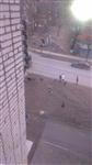 Бродячие собаки в Мясново, Фото: 3