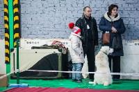 Выставка собак в Туле, Фото: 107