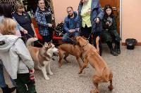 """Выставки собак в ДК """"Косогорец"""", Фото: 52"""