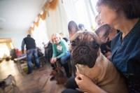 Выставка собак в Туле, 29.11.2015, Фото: 44