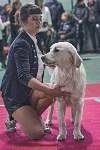Выставка собак в Туле 26.01, Фото: 73