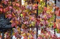 Золотая осень в Туле-2019, Фото: 127