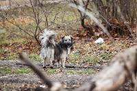 Дворняги, дворяне, двор-терьеры: 50 фото самых потрясающих уличных собак, Фото: 19