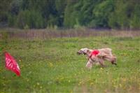 В Туле состоялись собачьи бега, Фото: 4