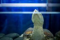Тульский экзотариум: животные, Фото: 13