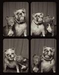 Собаки в фотобудке, Фото: 4