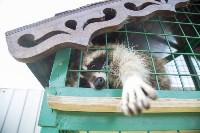 Зоопарк на набережной Упы в Туле, Фото: 9