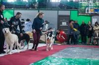Выставка собак в Туле, Фото: 95