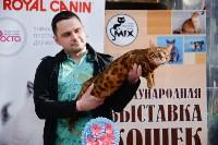"""Выставка """"Пряничные кошки"""" в ТРЦ """"Макси"""", Фото: 105"""