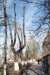 Деревья, кронированные три года назад., Фото: 5
