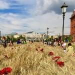 Цветочный джем: Тульское поле в Москве, Фото: 10