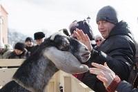 В Тульском кремле проходят масленичные гуляния, Фото: 34