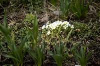 Весна 2020 в Туле: трели птиц и первые цветы, Фото: 40