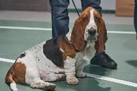 Выставка собак в Туле 26.01, Фото: 76