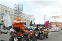 Тигры в городе!, Фото: 8