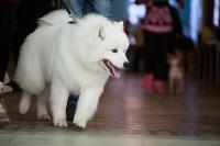 Выставка собак в Туле, 29.11.2015, Фото: 9