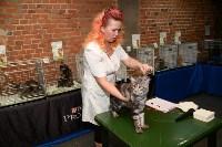 Выставка кошек в Искре, Фото: 52