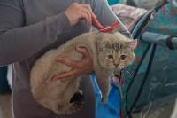 Выставка кошек в ГКЗ. 26 марта 2016 года, Фото: 60