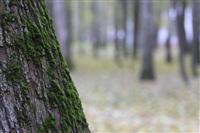 Осень, Фото: 5