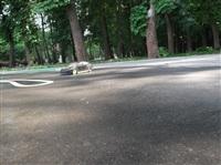 В Центральном парке появилась трасса для радиоуправляемых моделей, Фото: 19