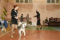 В Туле прошла всероссийская выставка собак, Фото: 39