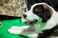 Выставка собак в Туле, Фото: 32
