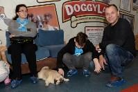 Выставка собак DogLand, Фото: 32