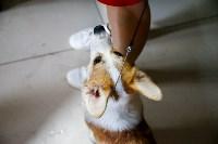 Выставка собак в Туле, Фото: 12
