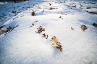 Морозное утро в Платоновском парке, Фото: 22