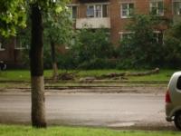 Упавшее дерево в Криволучье, Фото: 6