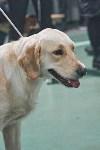 Выставка собак в Туле 26.01, Фото: 72